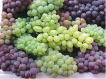 انگور؛ کیلویی ۶۰ هزار تومان!/ مافیای میوه در دست یک خانواده