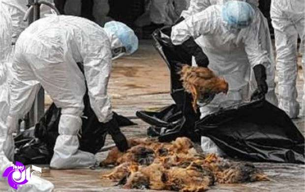 آنفلوآنزای پرندگان ابتلای انسانی در ایران نداشته