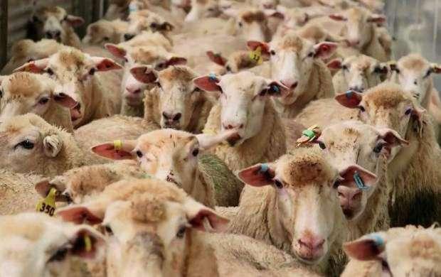 قیمت مرغ و گوشت کاهش مییابد