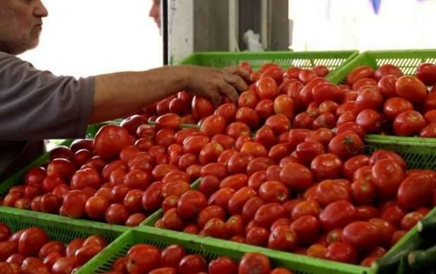 دلیل کمبود گوجهفرنگی در میادین میوه و ترهبار