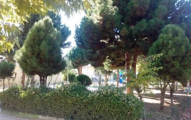 تاکید شهرداری تهران بر تعطیلی بوستانهای جنگلی
