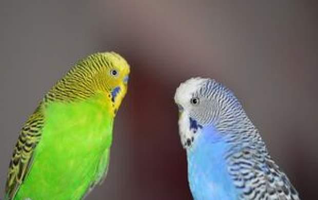 آیا حیوانات خانگی کرونا را انتقال میدهند؟