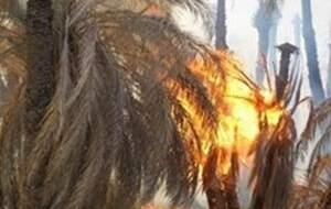 آتشسوزی در نخلستانهای ریگان