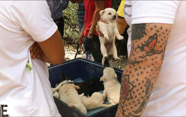 جمعه بازار سگ های اشرافی/ سگ ماست خور ۱۵ میلیون