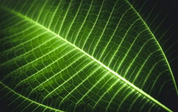 گیاهان افراد گمشده در جنگل را پیدا میکنند