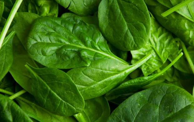 گیاهی سحرآمیز برای تقویت سیستم ایمنی بدن