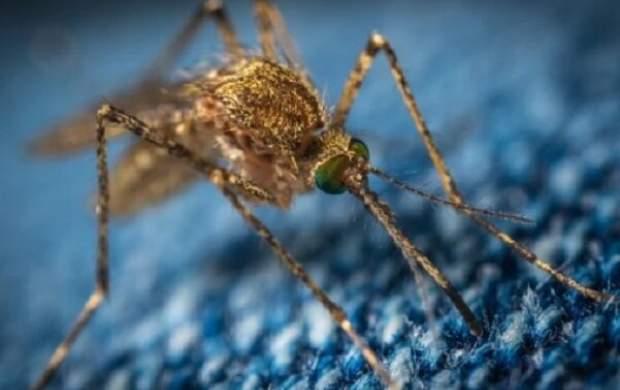 ویروس مرگبار«ای ای ای»کابوس تازه آمریکاییها