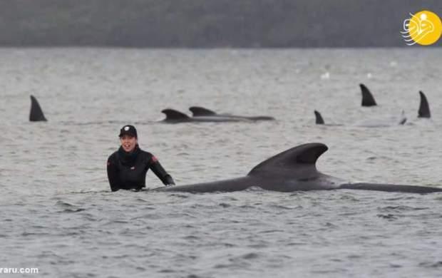 """عملیاتِ نجاتِ ۱۸۰ نهنگ  <img src=""""http://cdn.jahannews.com/images/picture_icon.gif"""" width=""""16"""" height=""""13"""" border=""""0"""" align=""""top"""">"""