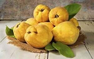 خواص شگفتانگیز میوه «به» چیست؟