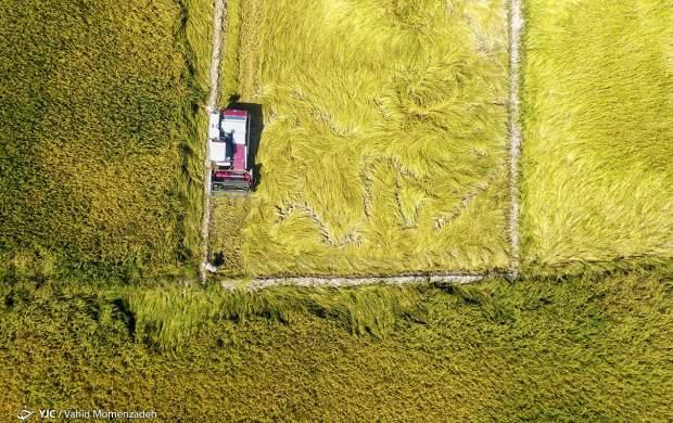 """تصاویر هوایی دیدنی از برداشت برنج  <img src=""""http://cdn.jahannews.com/images/picture_icon.gif"""" width=""""16"""" height=""""13"""" border=""""0"""" align=""""top"""">"""