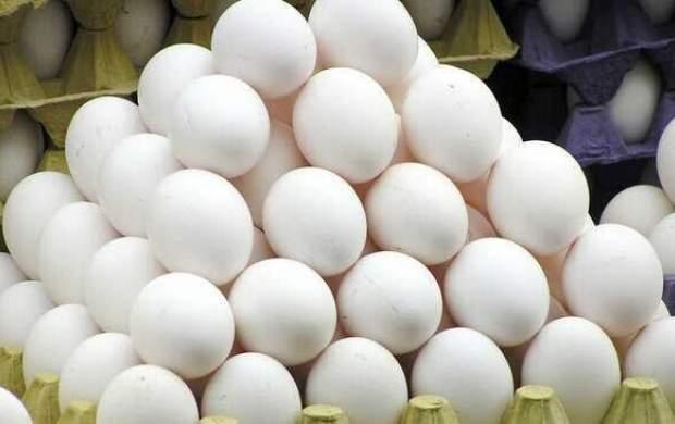 آغاز توزیع تخممرغ با قیمت مصوب در تهران