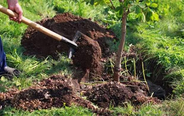 دلیل تأکید قرآن بر درختکاری چیست؟