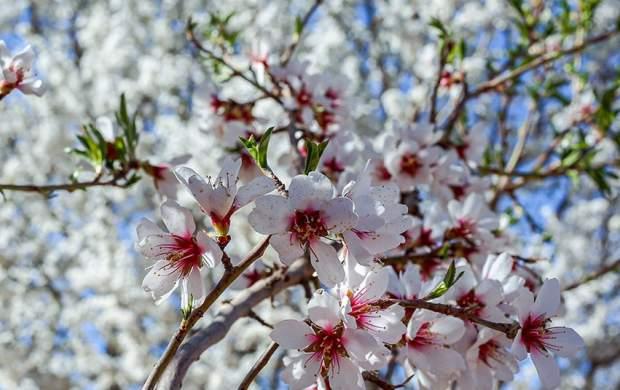 توصیههای طب سنتی برای فصل بهار