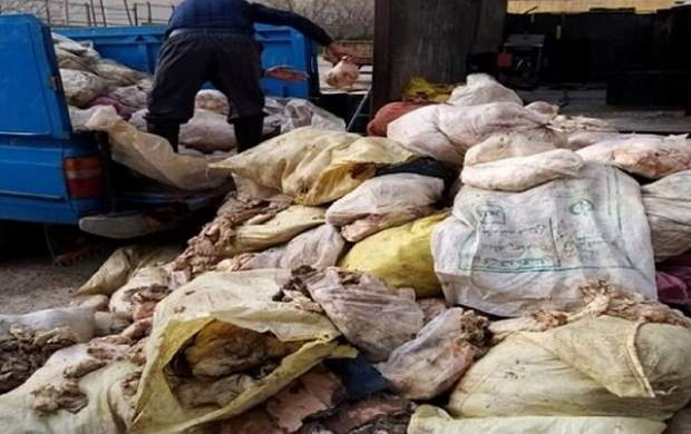 کشف بیش از ۶ تن پوست مرغ در کرمانشاه