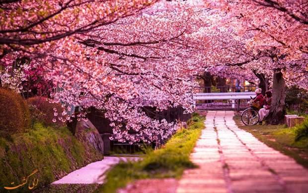 """تصاویر زیبا از شکوفههای گیلاس  <img src=""""http://cdn.jahannews.com/images/video_icon.gif"""" width=""""16"""" height=""""13"""" border=""""0"""" align=""""top"""">"""