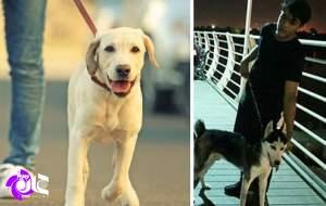 حمله یک اقلیت به امنیت و آرامش جامعه/ معضلی به نام سگ بازی و گرایش به نگهداری سگ/ کدام حقوق مردم زیر پا گذاشته میشود؟ +تصاویر