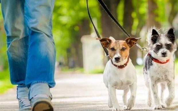 برخورد با سگ گردانی در دستور کار پلیس