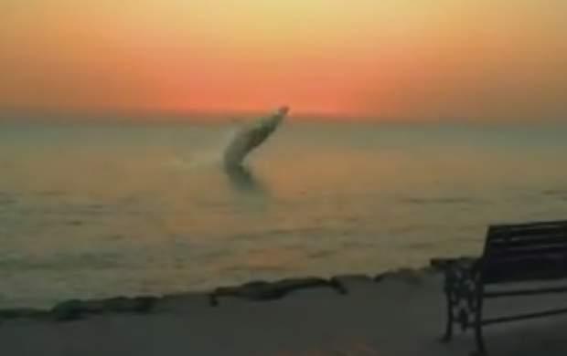 پرش زیبای نهنگ در ساحل بوشهر