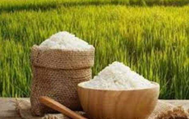 دلایل افزایش ۳۸ درصدی قیمت برنج