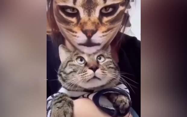 نرم افزاری برای سر کار گذاشتن گربهها