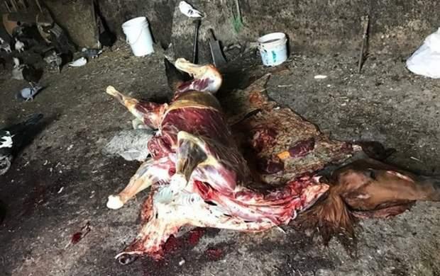 نیم تن گوشت اسب و الاغ در تهران معدوم شد